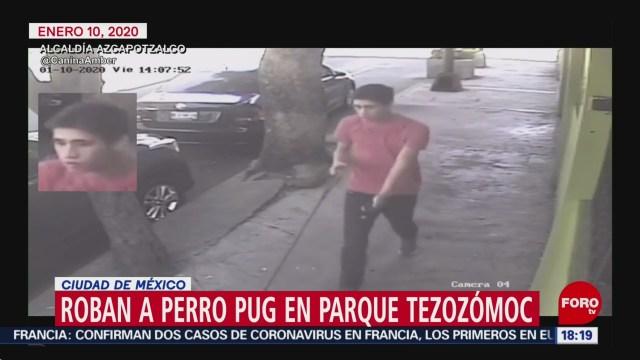 FOTO: nuevo robo de perrito en cdmx ahora un pug