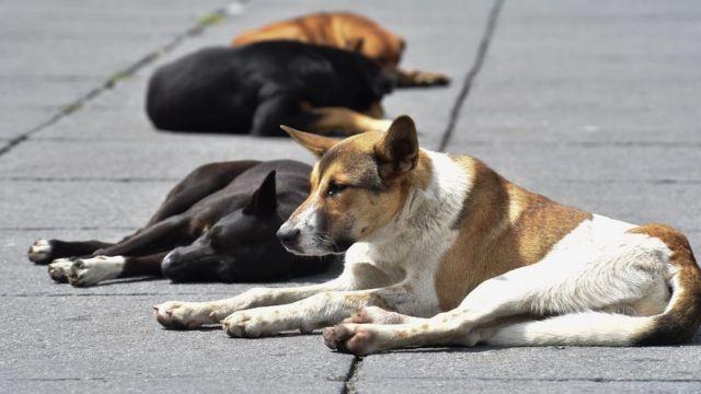 Foto 50 perros mueren envenenados en Puebla 28 enero 2020