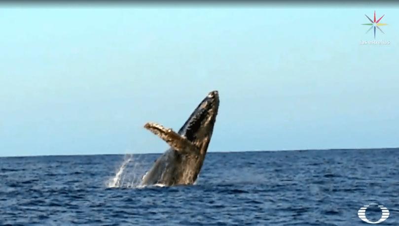 FOTO Avistamiento de ballenas en Baja California Sur (Noticieros Televisa)