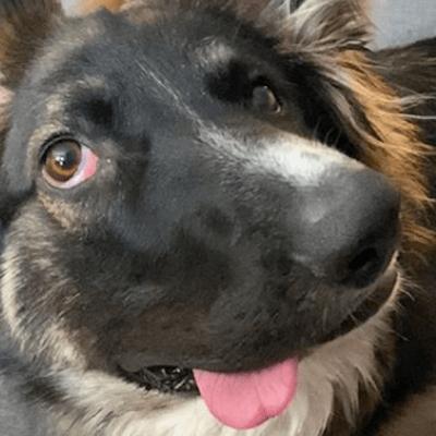 Brodie: El perrito 'cara chueca' más tierno del mundo