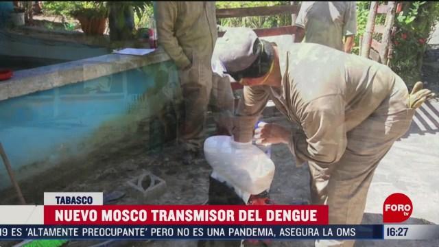 FOTO: descubren un nuevo tipo de mosco que transmite el dengue