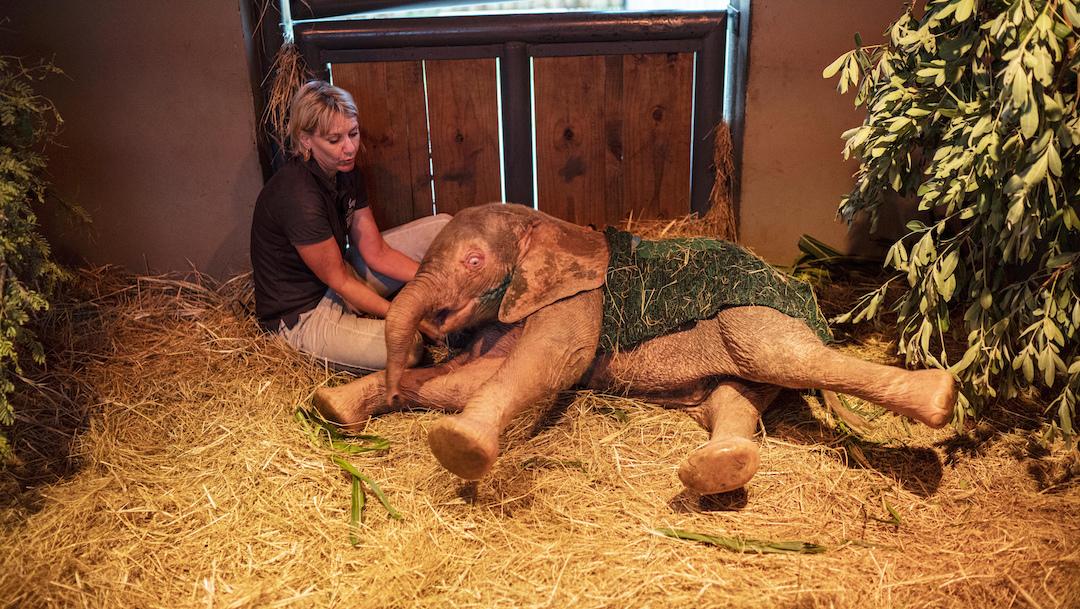 Foto Elefante Albina 14 Febrero 2020