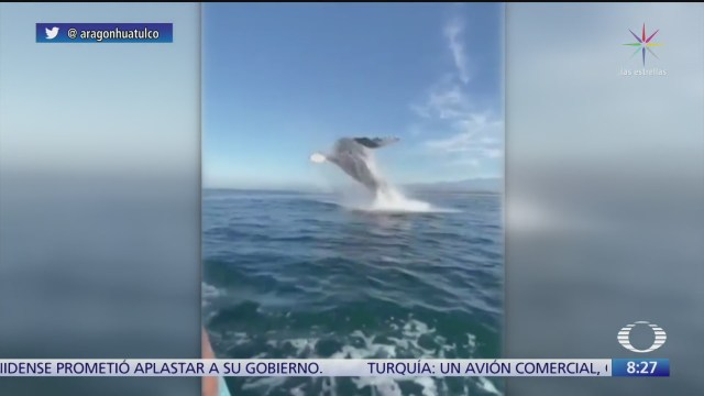 espectacular salto de una ballena en oaxaca