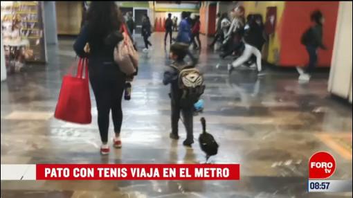 extra extra pato con tenis viaja en el metro