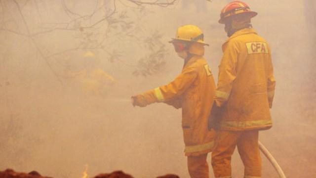 Foto: Australia contiene incendios forestales por primera vez desde septiembre 14 de febrero de 2020, (Getty images, archivo)
