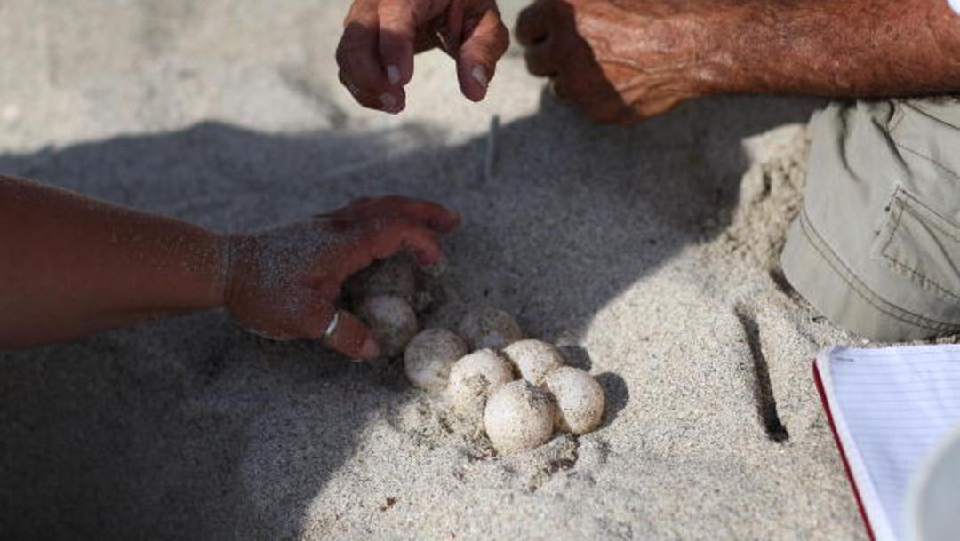 Foto: Aseguran en Oaxaca más de dos mil huevos de tortuga, 1 de febrero de 2020, (Getty Images, archivo)