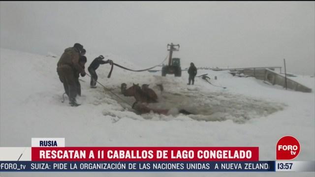 FOTO: granjeros rescatan 11 caballos que cayeron a un lago congelado en rusia