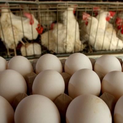 China lucha contra gripe aviar, además de coronavirus