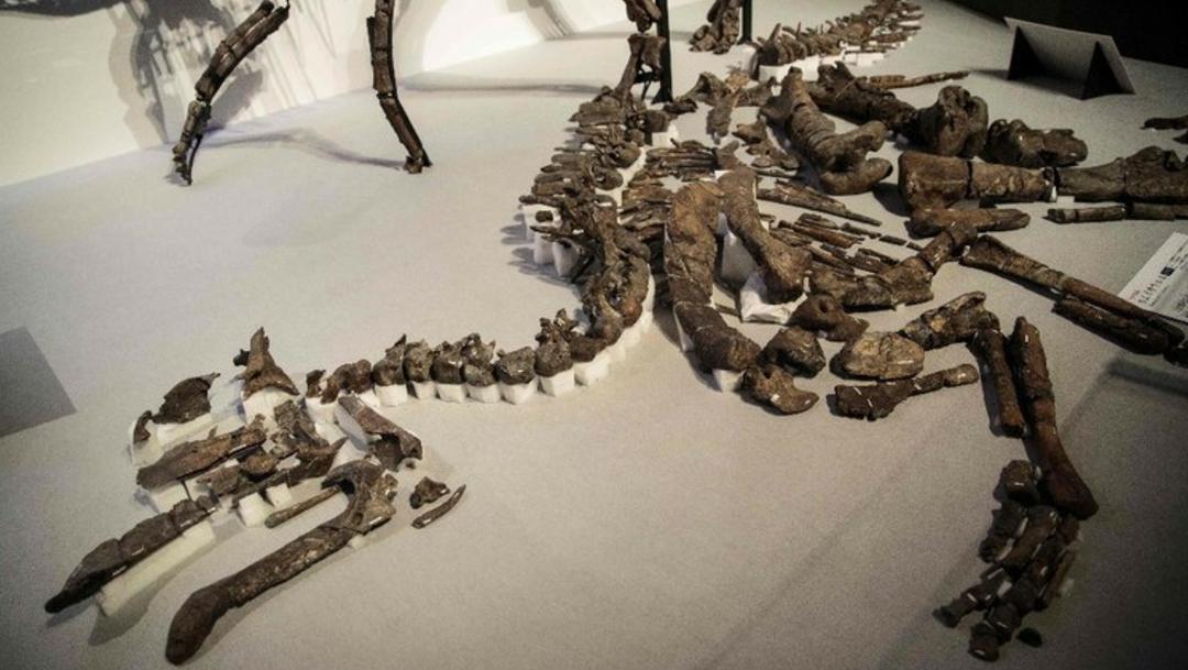 """Foto: Identifican fósiles de especies """"raras"""" de dinosaurios en Alaska, 5 de febrero de 2020, (AP)"""