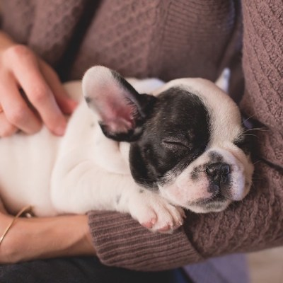 Ya no le llamen 'mascotas' a sus perros porque es despectivo, indica PETA