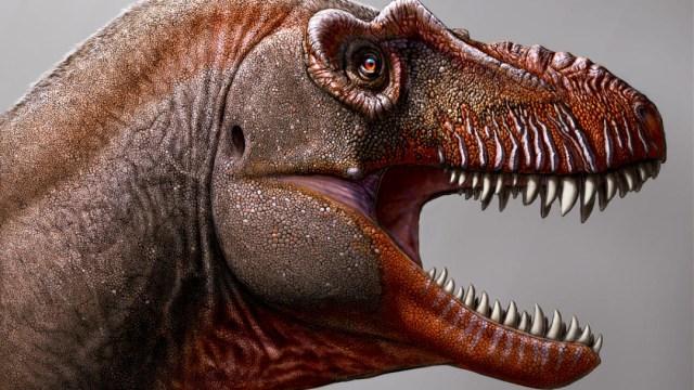 nuevo tiranosaurio canada (1)