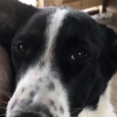 Adoptan perro en refugio animal y luego se lo comen