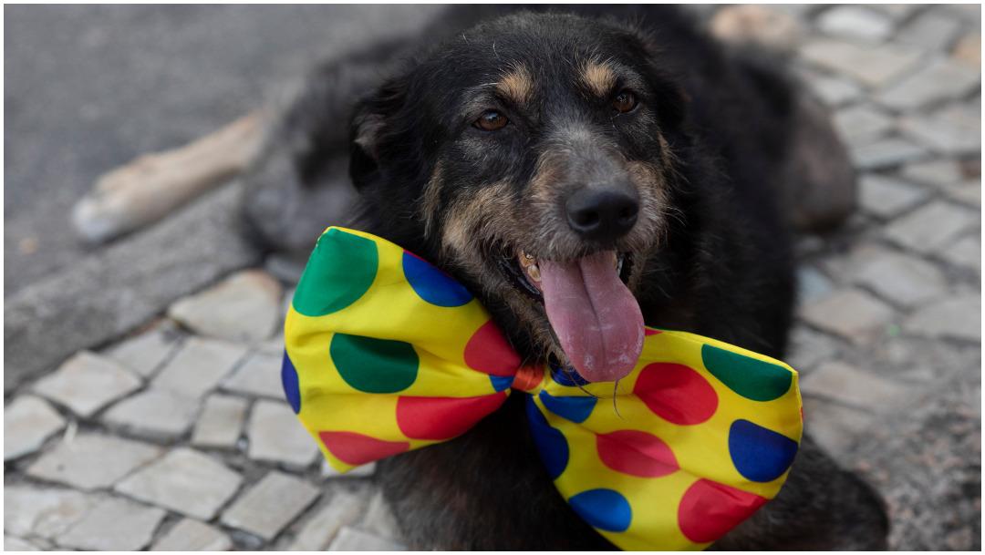 Foto: Los perros acapararon las miradas en Río de Janeiro, 16 de febrero de 2020 (AP)