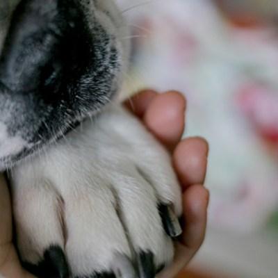 Foto: Perro da positivo por coronavirus en Hong Kong; será sometido a cuarentena, 28 febrero 2020