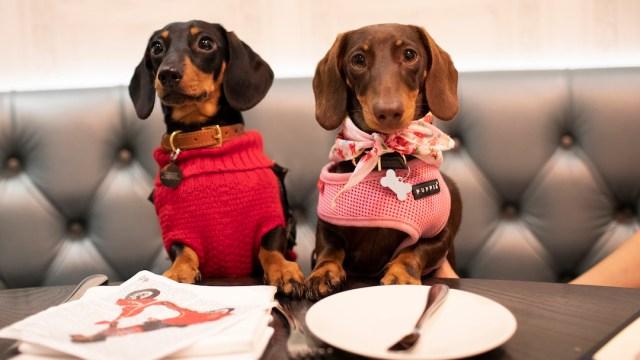 """Foto """"Estas son las mejores y peores comidas para perro según la PROFECO"""