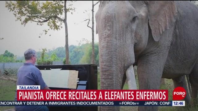 pianista ofrece recitales a elefantes enfermos