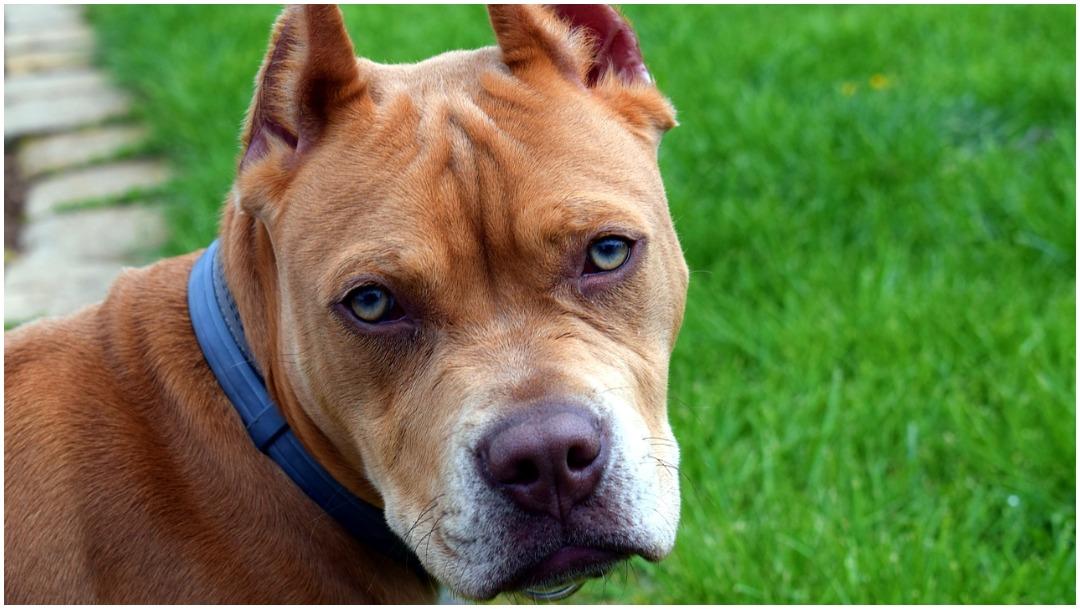 Imagen: Una perrita sacrificó su vida y la de sus cachorros para salvar a sus dueños, 23 de febrero de 2020 (Pixabay)