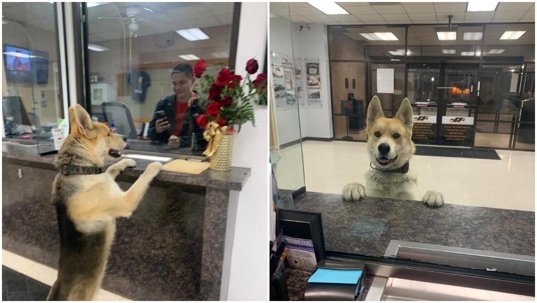 perro-perdido-foto-viral-estacion-policias-Odessa