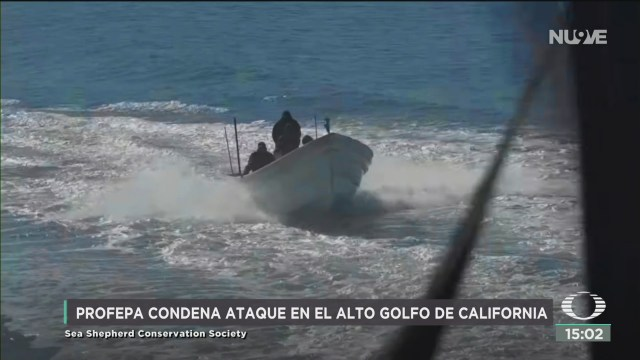 FOTO: profepa condena ataque en el alto golfo de california