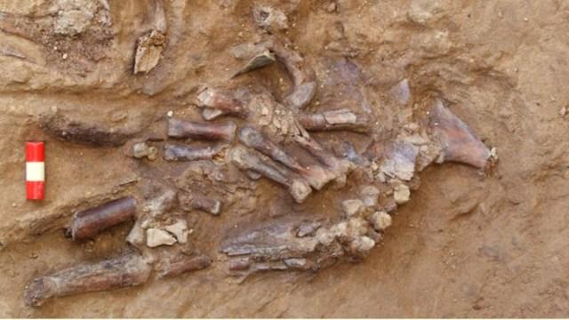 Esqueleto da pistas sobre funerales del Paleolítico medio