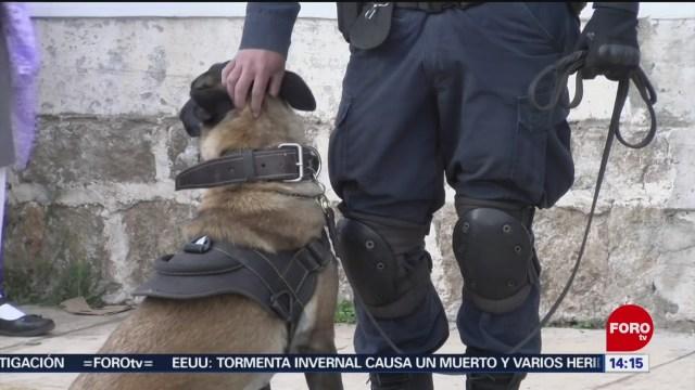 FOTO: revisan mochilas con binomios caninos en escuelas de puebla