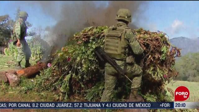 Foto: Sedena Incinera Plantío Amapola Durango 25 Febrero 2020