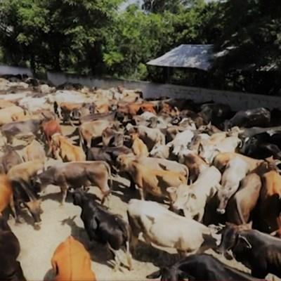 Denuncian a ganaderos fantasmas por fraudes en Chiapas
