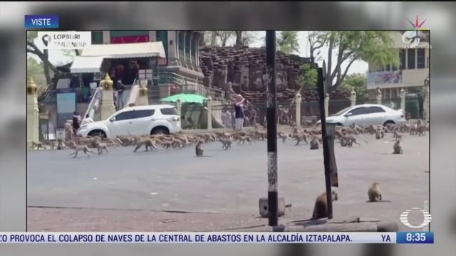 cientos de monos invadieron calles de tailandia en busca de comida