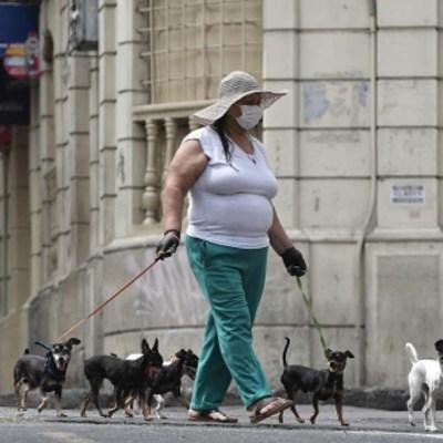 Investigadores entrenarán a perros para detectar coronavirus