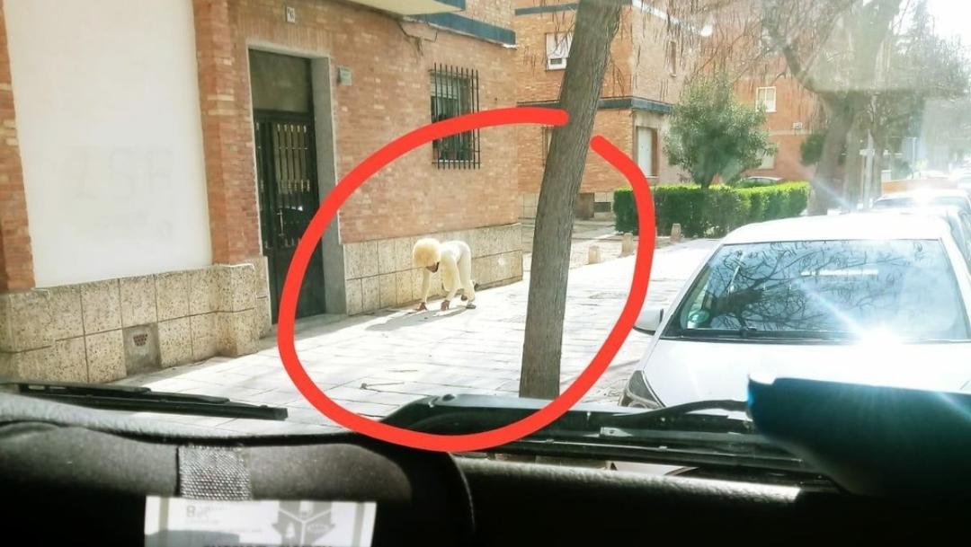 Hombre se disfraza de perro para salir a la calle en España