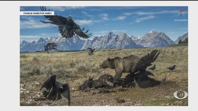 Foto: Mejores Fotografías Década Publicadas National Geographic 20 Marzo 2020