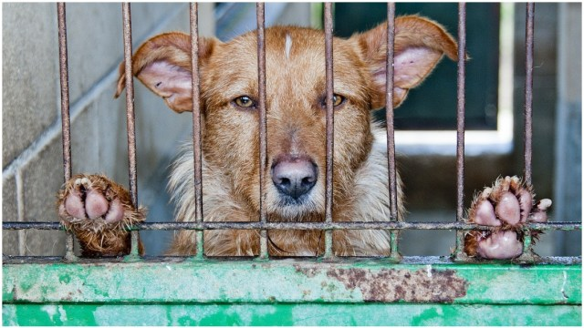 Foto: Proponen castigar con cárcel el abandono de perros, 1 de marzo de 2020 (Pixabay)