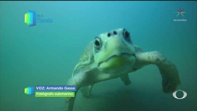 FOTO: 16 marzo 2020, por el planeta arribada de tortuga golfina en oaxaca