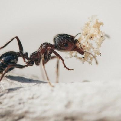 Usuarios de Facebook crean grupo donde fingen ser hormigas