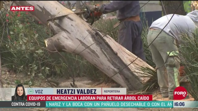 FOTO: 25 de abril 2020, fuertes vientos provocan caida de arbol en la alcaldia benito juarez