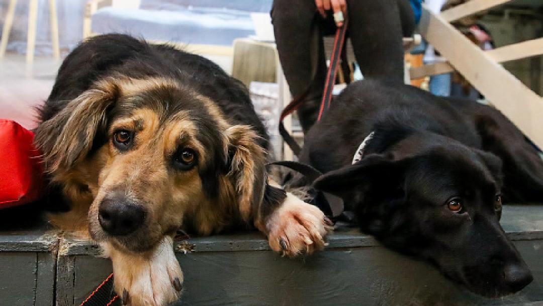 Foto: Coronavirus: ¿Humanos podrían transmitir enfermedad a perros y gatos?, 5 de abril de 2020, (Getty Images, archivo)