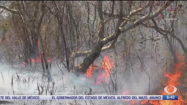 hay 51 incendios activos en la republica mexicana