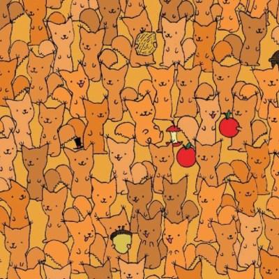 Reto viral: ¿Puedes encontrar al ratón entre las ardillas?
