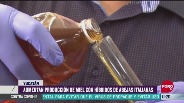 aumenta produccion de miel con hibridos de abejas italianas