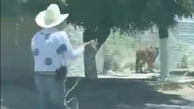 En calles de Tlajomulco intentan atrapar a tigre. (Foto: Redes Sociales)