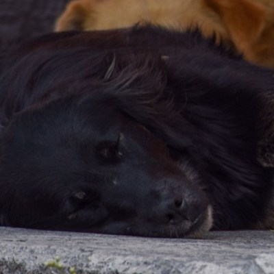 China prohíbe criar perros para su consumo humano tras brote de coronavirus