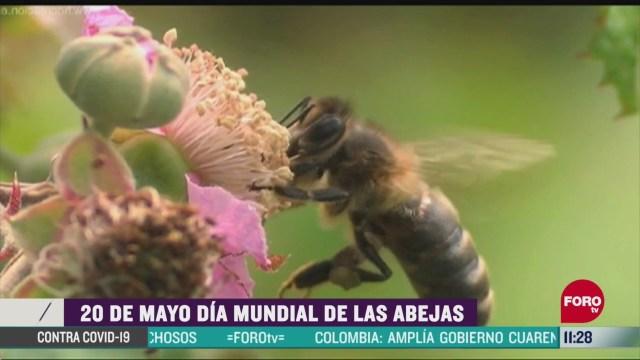 este 20 de mayo es el dia mundial de las abejas