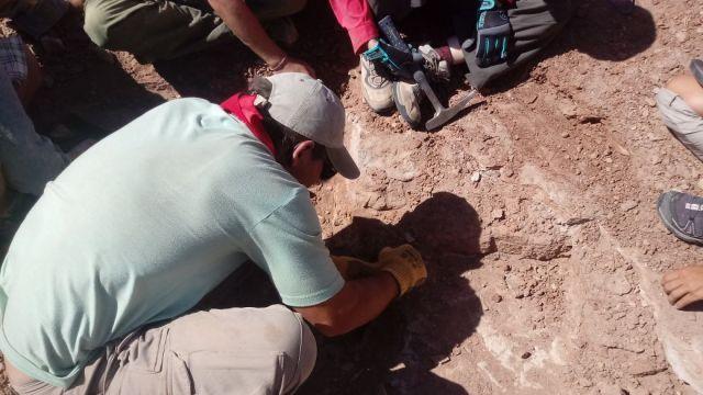 Foto: Impresionante cráneo de tortuga de 95 millones de años sorprende al mundo, 6 de mayo de 2020, (@CTyS_UNLaM)