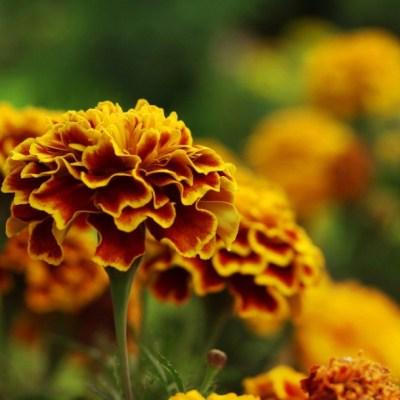 México es el segundo país con más plantas medicinales en el mundo