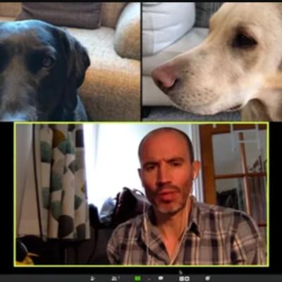 Videollamada de dos perros con su dueño causa sensación en redes sociales