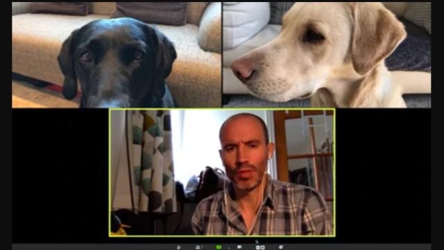 Perros-labrador-en-videollamada-con-su-dueño