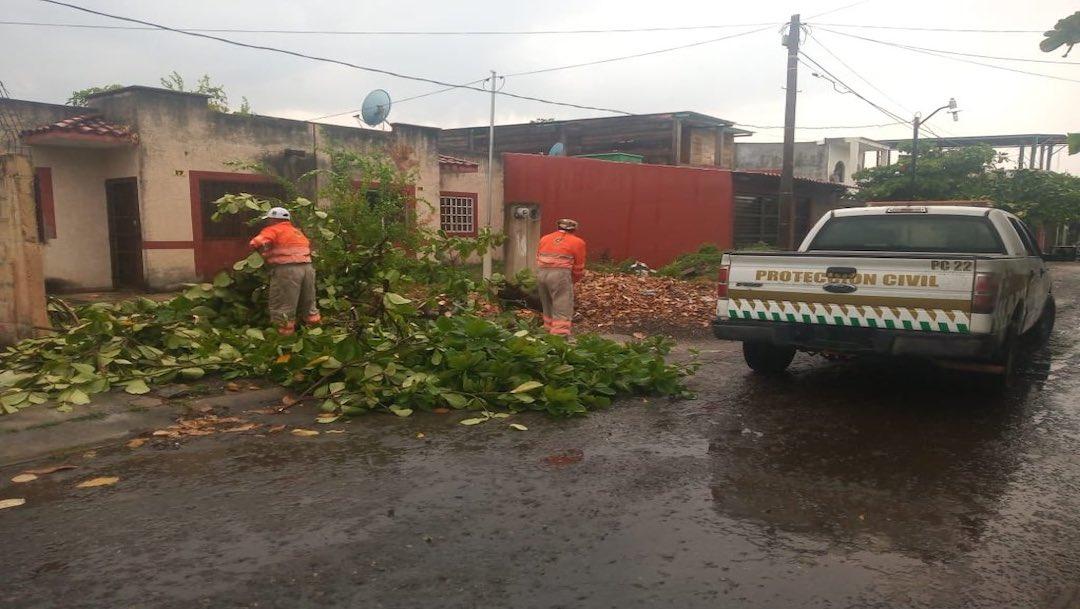 Lluvias y vientos causan caída de árboles en Chiapas