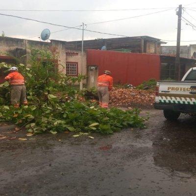 Lluvias y ráfagas de viento causan encharcamientos y caída de árboles en Chiapas