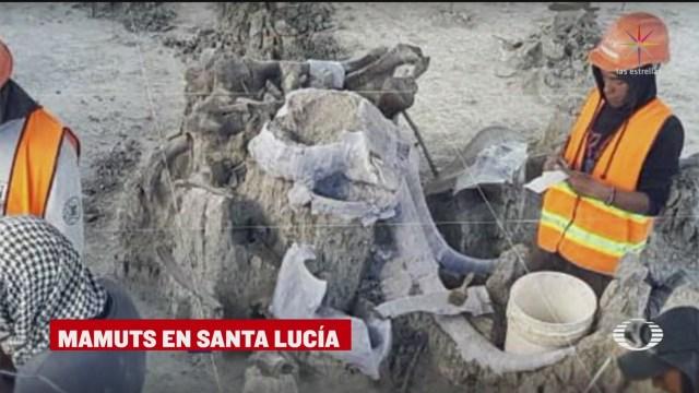 Hallan restos de 60 mamuts en el Aeropuerto de Santa Lucía