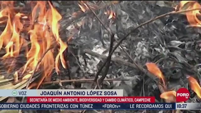 FOTO: incendios forestales en campeche consumen miles de hectareas